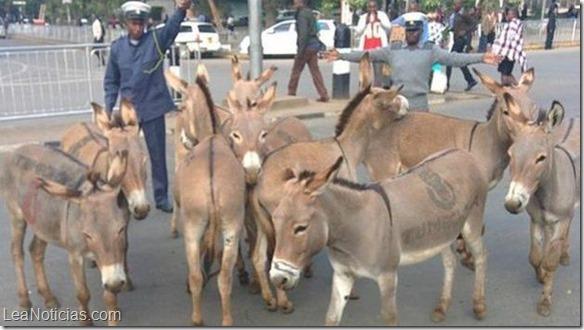 _nairobi_donkey_6