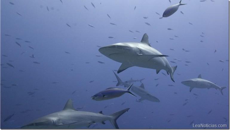stockvault-tiburones