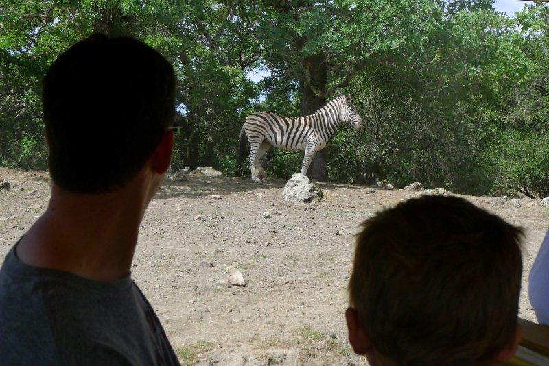 safari west getaway
