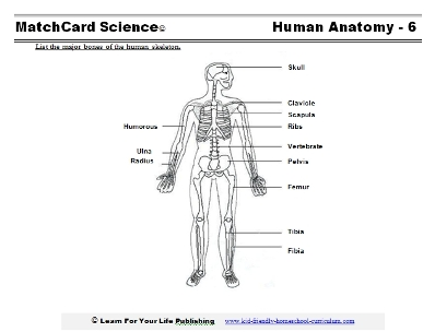 Human Skeleton Diagram