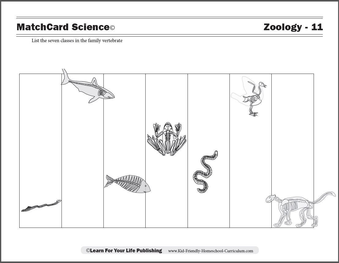Fun Worksheet Elementary Science