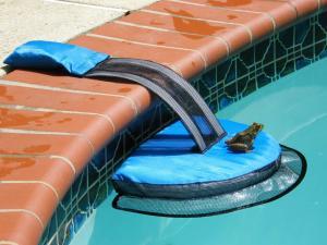 FrogLog photo by Rich Mason