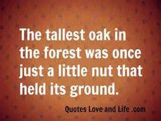 a706130c3b5f538a0ae85dc2befb274e--oak-tree-forests