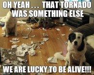 Canine-punishment