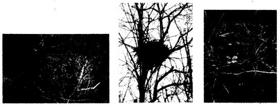 NCERT Solutions for Class 4 पर्यावरण अध्ययन Chapter 16 चूँ -चूँ करती आई चिड़िया 1