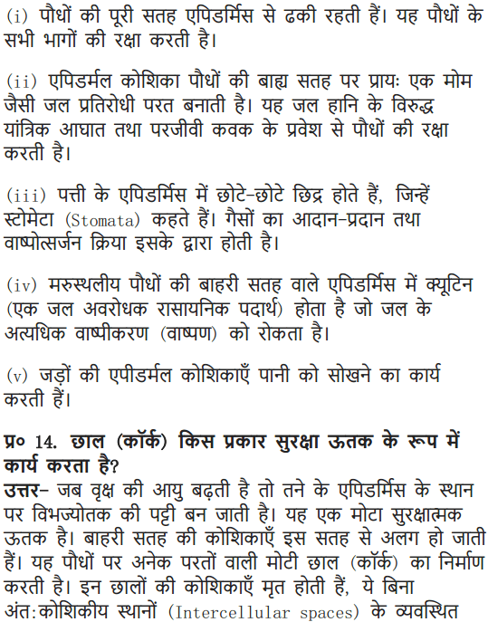 NCERT Solutions for Class 9 Science Chapter 6 Tissues Hindi Medium 9