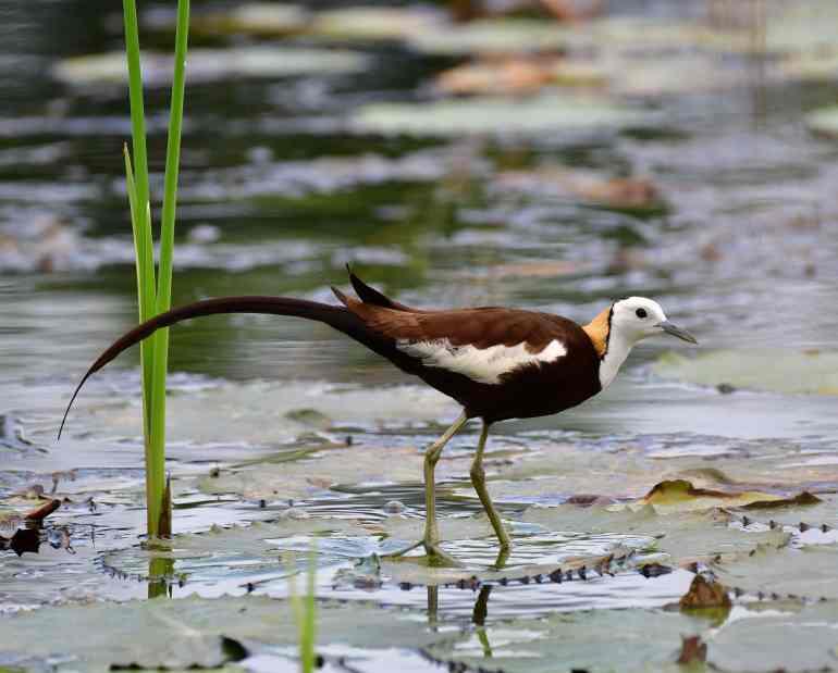 在台灣許多特有種需要被保護
