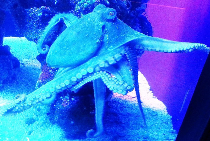 octopuses might be aliens