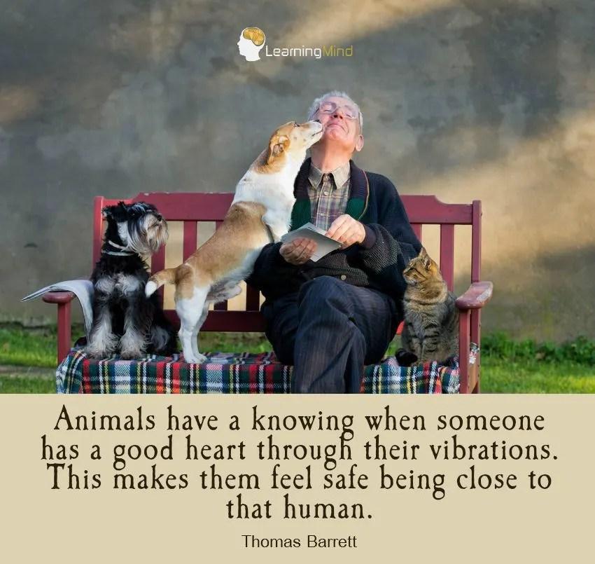 animals-good-vibrations