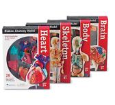 Sets de anatomia para montar