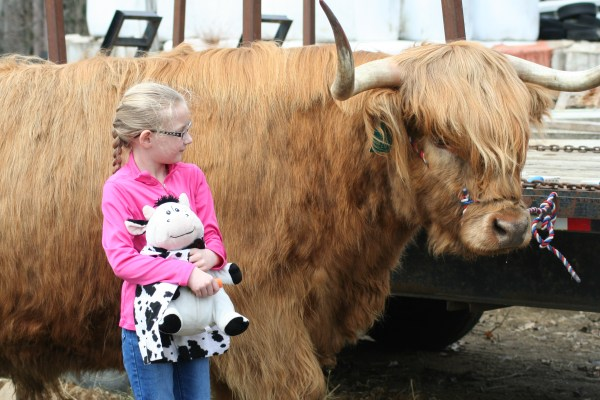 A girl with a cow