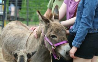 Donkey and lamb
