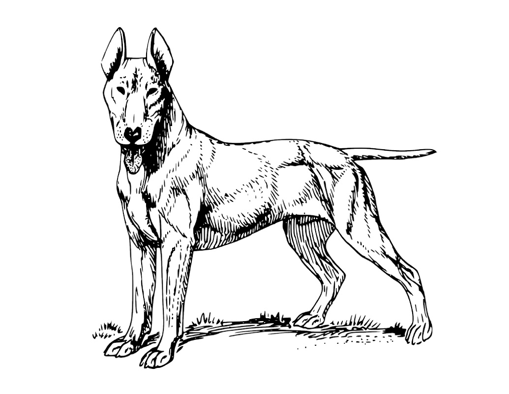 Realistic Dog Coloring Pages Learning Printable
