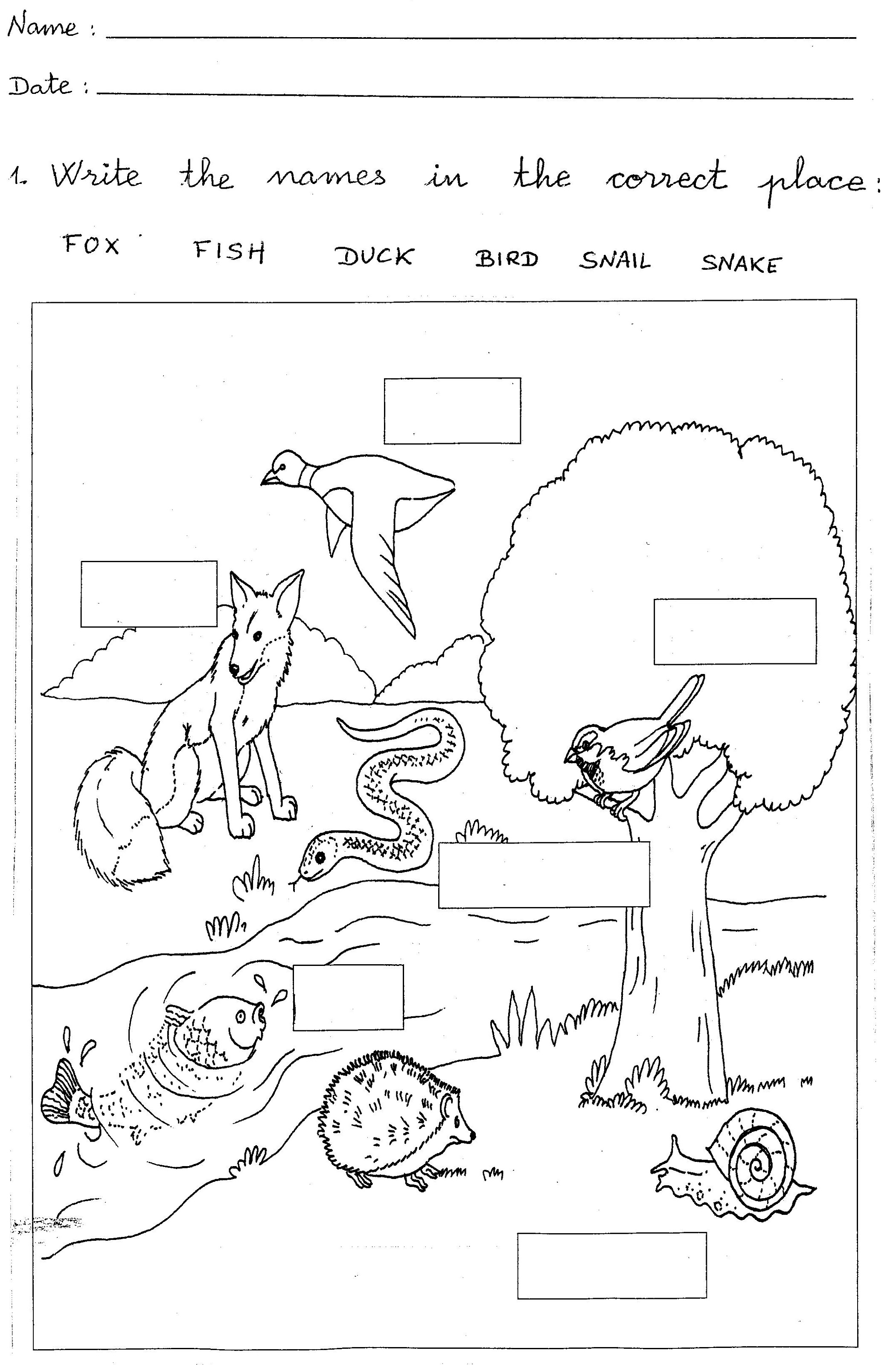 World Map 1st Grade Worksheet