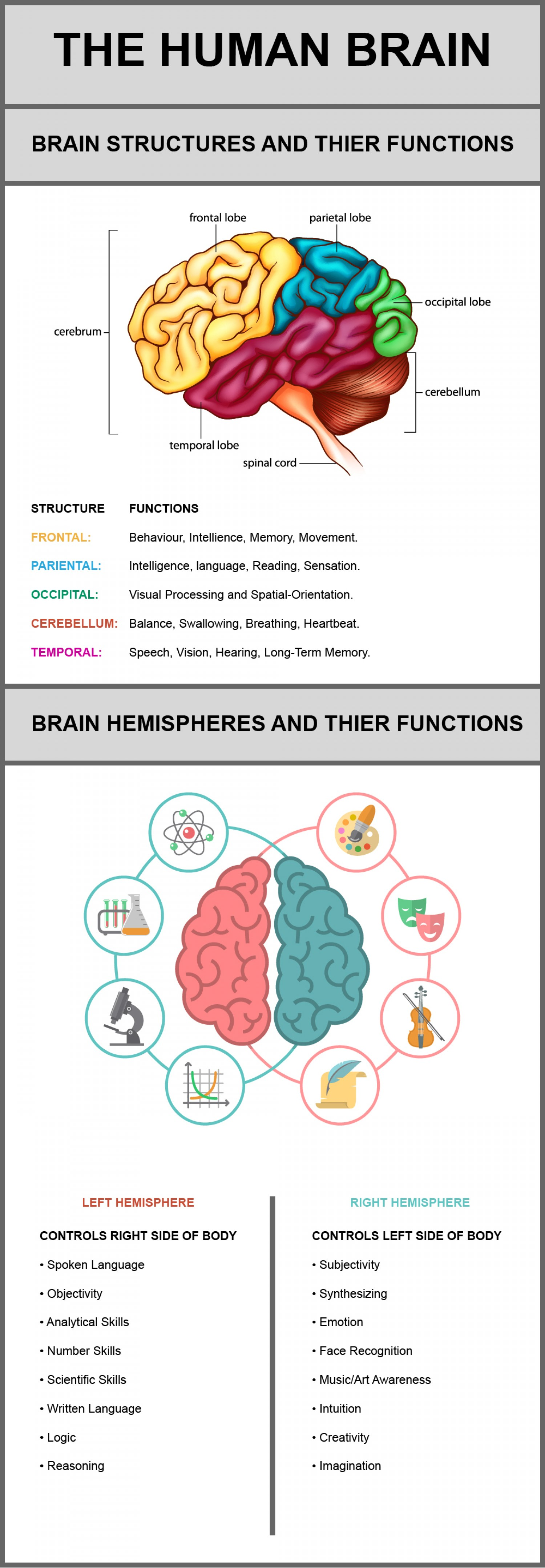 The Human Brain Its Structures And Their Functions
