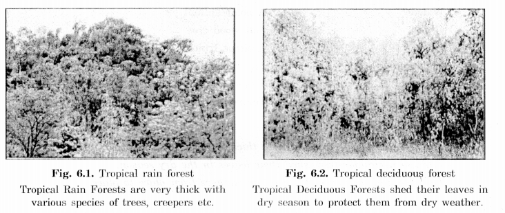 NCERT Solutions for Class 7 Social Science Geography Chapter 6 Natural Vegetation and Wild Life 1