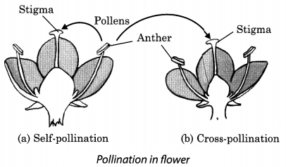 Reproduction in Plants Class 7 Extra Questions and Answers Science Chapter 12 1