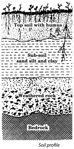 Soil Class 7 Extra Questions and Answers Science Chapter 9 1