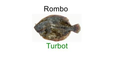 Turbot in italian language