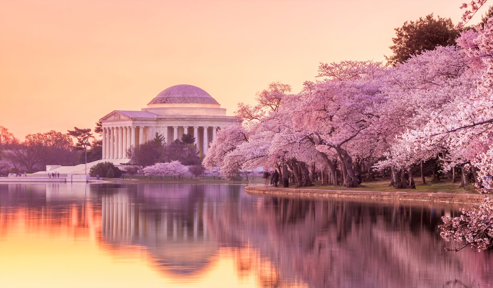 Dc Dc Cherry Trees Learn Language Culture With Sceta