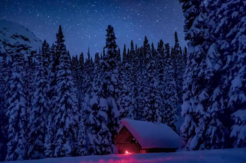 Pins en forêt en hiver la nuit