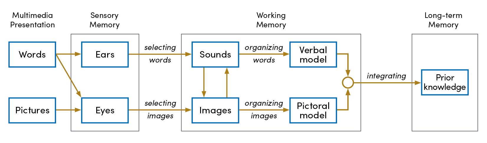 segmentation effect chart