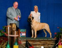Shiloh-Best-of-Breed-Nov-2012-Aa-1-1-1024x800.jpg
