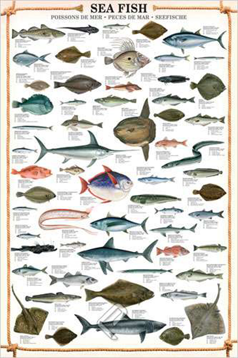 Sea Fish Full Color Wall Poster 38 X 27 Leave Only Bubbles