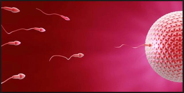 Cara Meningkatkan Jumlah Sperma Secara Alami