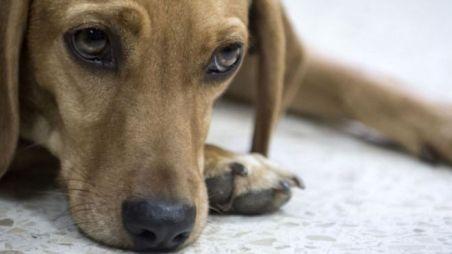 Un chien 'porte plainte' contre sa maîtresse