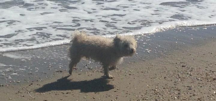 Strand für Hunde