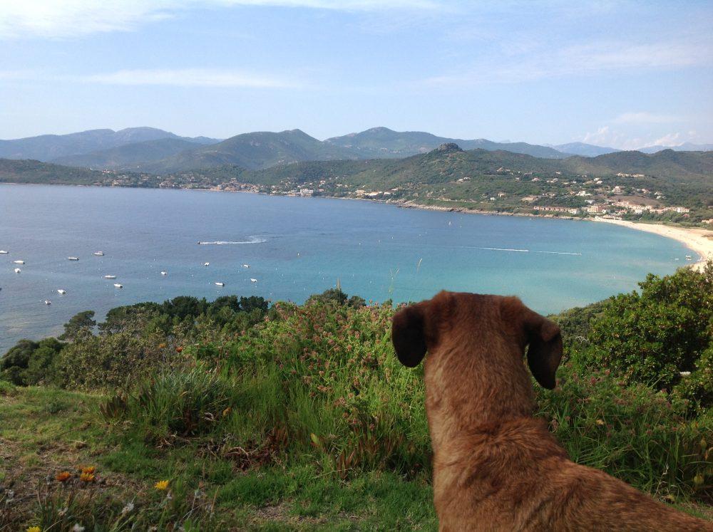 Auswandern nach Spanien mit Marie Kondo und Hund