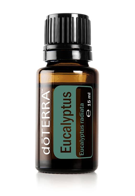Eukalyptus  Eucalyptus radiata