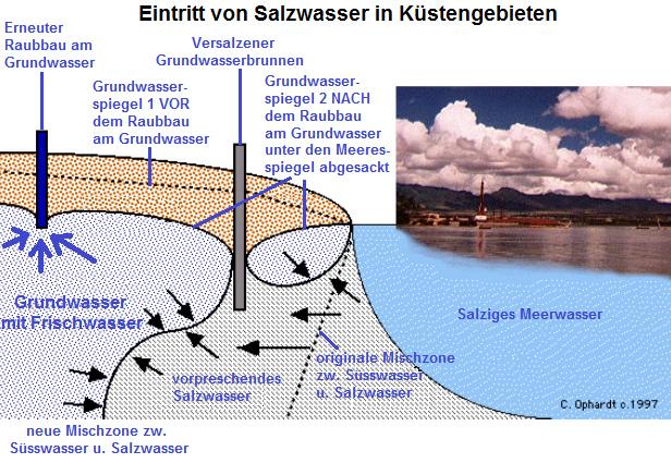 Schematische Darstellung zur Grundwasserversalzung an Küsten (Quelle Ophardt)