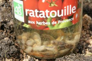 Ratatouille de limaces