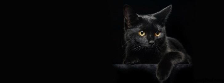 siyah rengin anlamı  Renklerin Anlamları ve Psikolojik Etkileri siyah