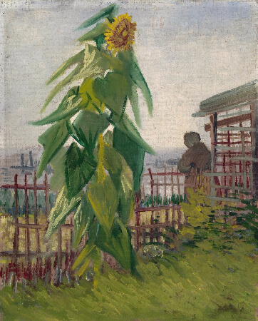 Van Gogh, Allotment With Sunflower, 1887