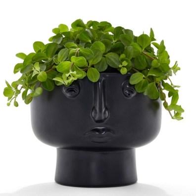 cache pot tête noir plante verte