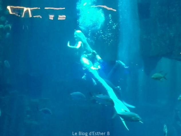aquarium_paris_sirene