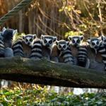 Ma visite au Parc Zoologique de Paris