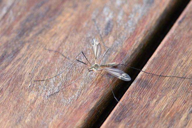 La moustiquaire est la solution anti-moustique
