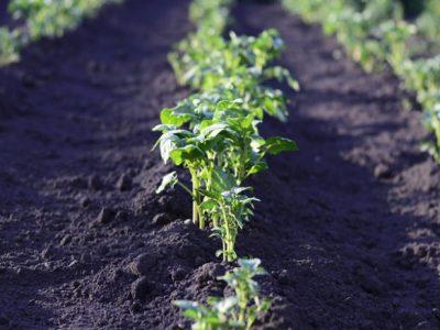 emplacement des légumes