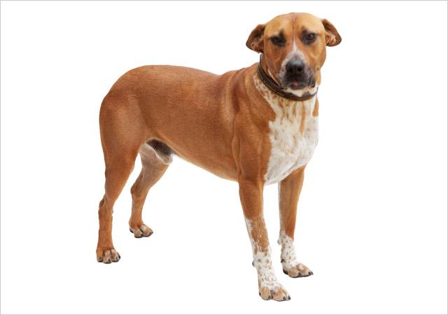 Cães procuram dono