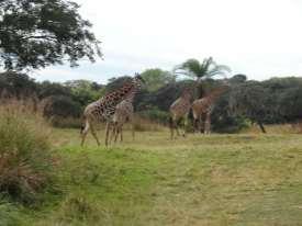 Vivez un safari d'exception à Animal Kingdom ...