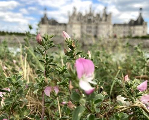 Enfin visiter la Loire et ses châteaux.
