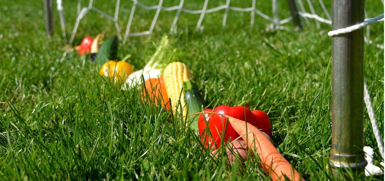 Gemüse im Tor