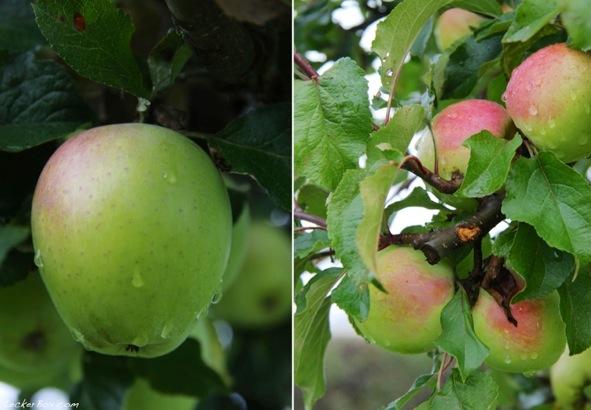 wpid-Apfel-Kuerbis-Muffins_2-2013-10-13-15-351.jpg