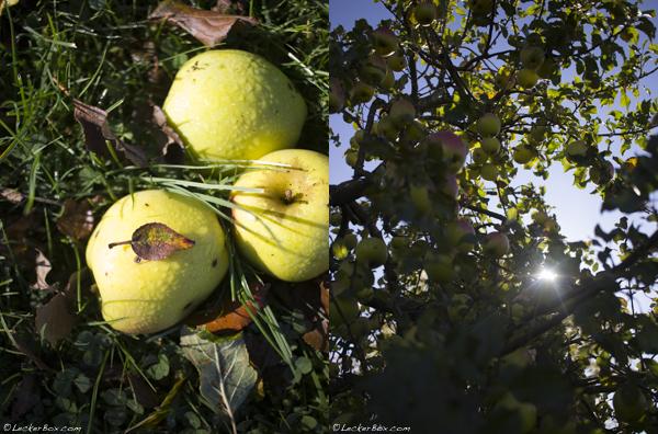 Apfelkuchen-Muesli_2-2017-11-4-08-00.jpg