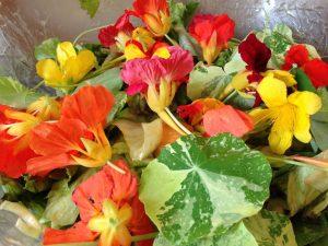 Blattsalat mit Löwenzahn,, Früchten und Kapuzienerkresse Blüten