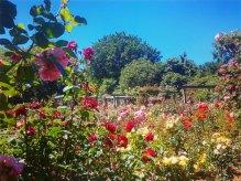 queenspark_southland